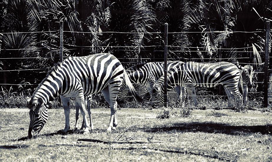 soteropoli.com fotografia fotos de salvador bahia brasil brazil 2010 zoo zoologico by tuniso (1)