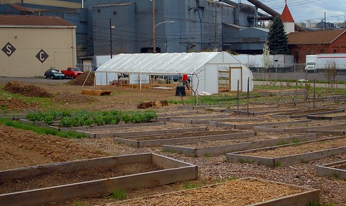 Braddock's urban farm (detail from photo by: Ryan Thompson, creative commons license)
