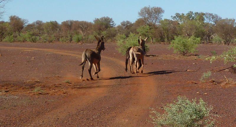 donkey time 4