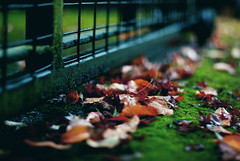 """""""The wind-blown leaves turn Dancing the golden sunlight across the tired floor."""" -   Matt Dimmic (ewitsoe) Tags: seattle autumn cold fall wet leaves rain fence 50mm moss nikon october seasons explore pacificnorthwest frontpage pnw hff d80 happyfencefriday fenchfriday"""