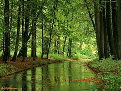 (Astrid Photography.) Tags: wood nature water colors veluwe apeldoorn royalgarden explore42 palacegardentloo astridphotography betterthangood onlythebestofnature