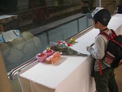 farewell ceremony to Kou Kou (TaoTaoPanda) Tags: panda koukou ojizoo