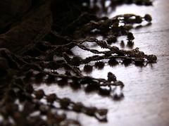 (:Linda:) Tags: brown scarf germany pattern village fringe thuringia textile onecolor franse tuch mynewscarf brden troddel