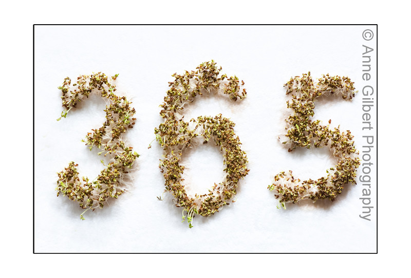 research papers of garden cress seedslepidium sativum Health benefits of garden cress seeds or halim seeds the health benefits of garden cress seeds have been recognized in europe and india for decades now.