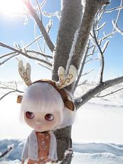luna snow tree