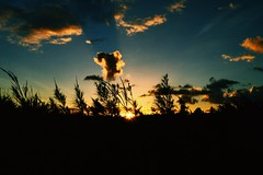 Sunset over Kauai (brp1113) Tags: tropical scenic hawaii palmtrees palm worn ocean sunset kauai