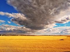 Campos de Castilla (Jotha Garcia) Tags: paisaje landscape campo camp nube clound sky cielo castillalamancha españa spain jothagarcia huawei verano summer 2017 junio june comunidadespañola 7dwf nwn