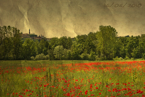 Poppy field, Old Style Texture