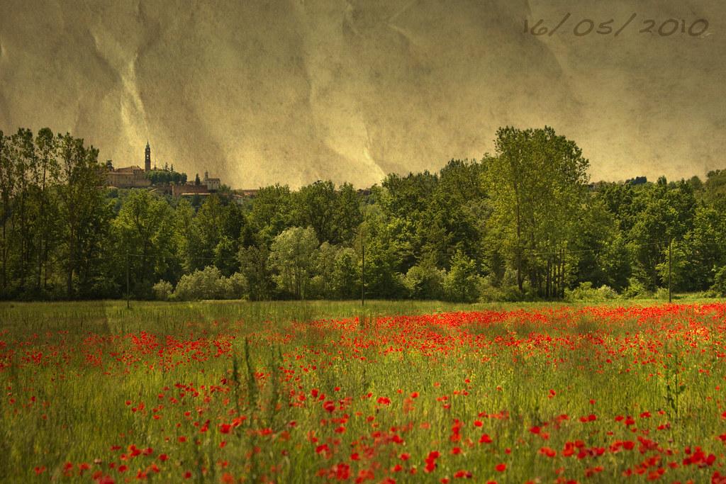 Poppy field, Old Style Texture