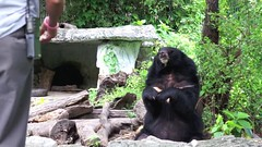 khaodin on Vimeo by rescued