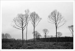 what you see is what you get (nato kino) Tags: wood trees france 35mm hiver nb arbres zeissikon fort bois 2010 feuillesmortes fortdemontmorency zeissbiogon35mmf20 natokino