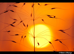 Straw & sun (bnilesh) Tags: sunset orange india abstract golden straw indore