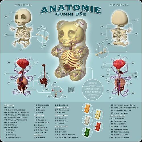 Jason Freeny, Anatomie Gummi Bär