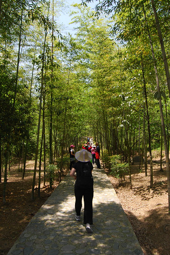 k21 - Walking through the Bamboo