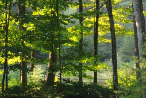 An astoundingly beautiful morning