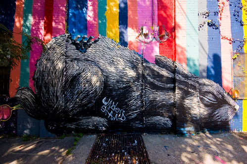 Roa and the Amazing Technicolor Dreamwall