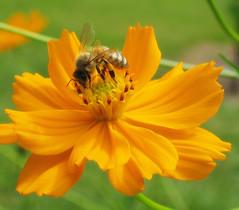 Bright and Bumbee #1 (L.D. Bonner) Tags: flower macro nature arboretum bee batonrouge cohn