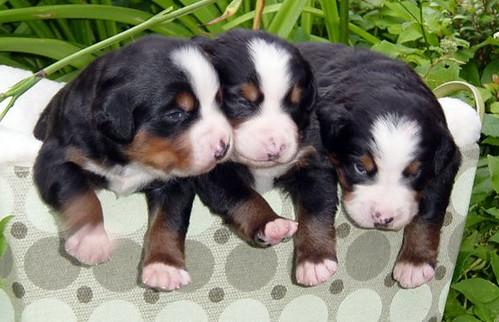 星星's pups