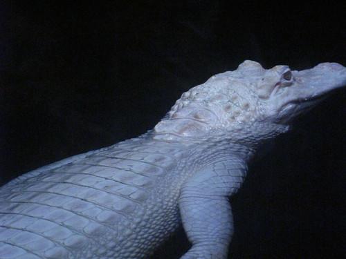 Georgia Aquarium 82