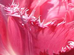 petali coi frizzuli