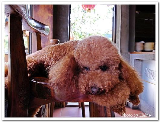 卡哇依的店狗