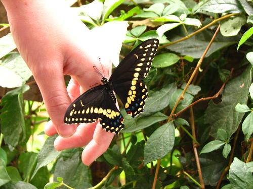 releasing the butterfly