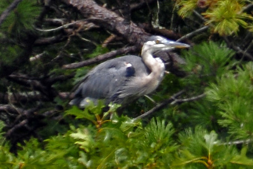 GBH Monks cove 3