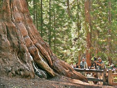 Shake Hands With The General (goingslo) Tags: camping trees camp tree howard rob redwood sequoia sequoianationalpark generalsherman