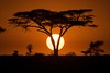 Sunrise at the Serengeti (Dave Schreier) Tags: africa morning sun tree dave sunrise tanzania kenya mara serengeti grassland acacia schreier wwwdlsimagescom