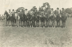 line horses