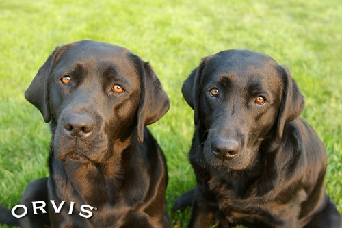 Orvis Cover Dog Contest - Maria and Zoe