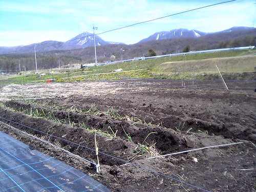 野菜畑 by Poran111