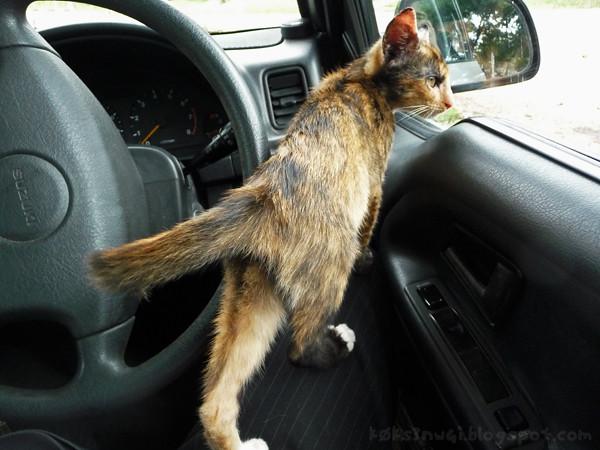 Cat Nav