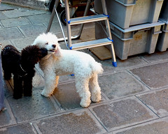 Bsame mucho (LORENZO.L.) Tags: dogs lumix kiss natura baci amici venezia distillery fz cani critica superphotographer fz38 fz35