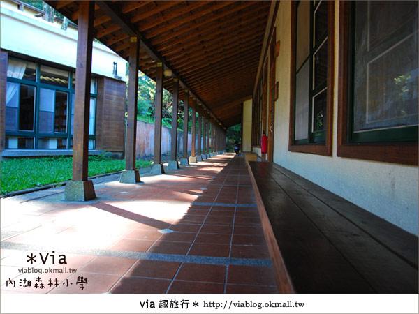 【溪頭一日遊】森林中的夢幻校園~內湖森林小學21