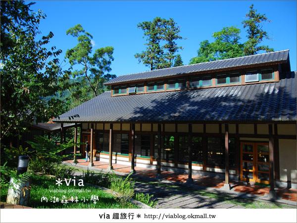【溪頭一日遊】森林中的夢幻校園~內湖森林小學13