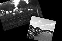 similarity (Stephi 2006) Tags: sheeps streetka popoclubs