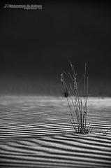 بــين الظـل والـنـور تــكمن حـــكاية   Explore   (Abdulrahman AL-Dukhaini    عبدالرحمن) Tags: shadow plant nikon desert single 200 18 نور 2010 تصوير d90 صحراء ظل رمال عبدالرحمن abdulrahman نيكون نبته lens18200mm احادي الدخيني aldukhaini