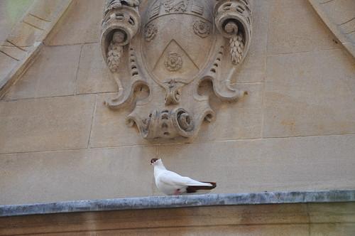 Ninja dove