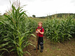 Corn field walk Photo