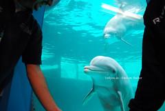 3. Geburtstag von Delfin Donna im Zoo Duisburg (1st4you.de) Tags: donna geburtstag delfin tier torte feier delphin sugetier zooduisburg delfinschau tuemmler frankmfischer 1st4youde duisburgfansde dufansn1728 ulfschnfeld