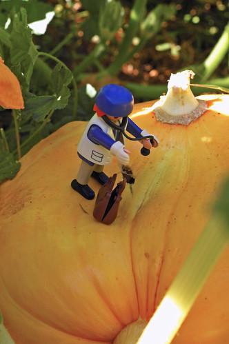 Whats Wrong Eating my Pumpkin?