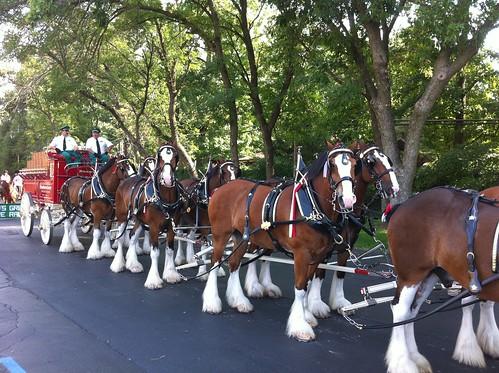 Anheuser-Busch horses will