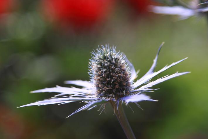 091710_flower06