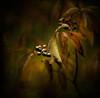 berries (Mari Anne Werier) Tags: grandbend pineryprovincialpark specialpicture magicunicornverybest magiayfotografia thelittlebookoftreasures