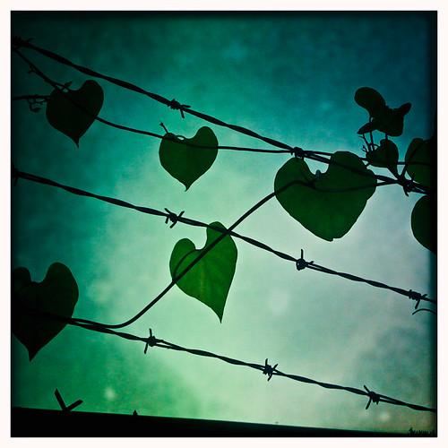 Stifling love