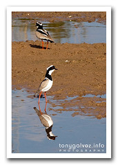 Pantanal, Brazil