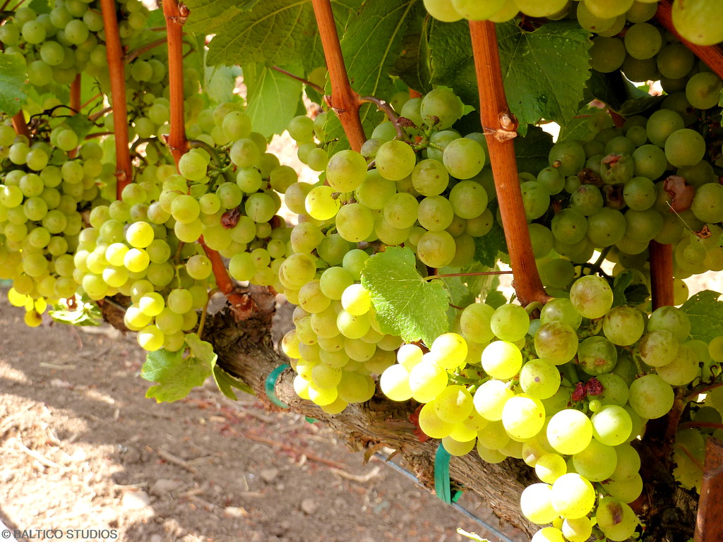 P1020096R3 California Wine Country Sonoma Valley