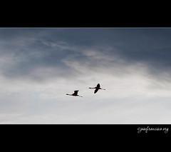 Flying silhouettes (josefrancisco.salgado) Tags: chile sky cloud silhouette clouds nikon desert cielo nubes desierto silueta nikkor salar cl nube d3 sanpedrodeatacama salardeatacama saltflat desiertodeatacama atacamadesert repúblicadechile 70300mmf4556gvr reservanacionallosflamencos republicofchile iiregióndeantofagasta provinciadeelloa
