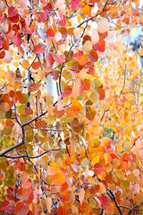 (lienhp) Tags: california autumn trees orange mountain fall leaves yellow season fallfoliage highsierra